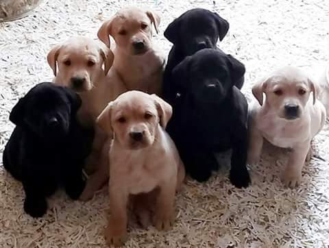 Pups at Attention